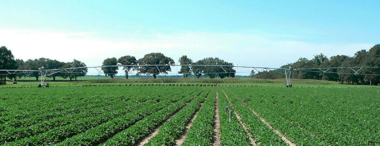 crops-BG